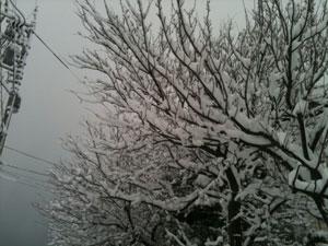 1.31.2011.1.jpg